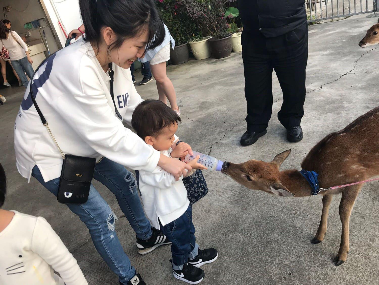 山腳鹿場-餵水鹿寶寶喝內內